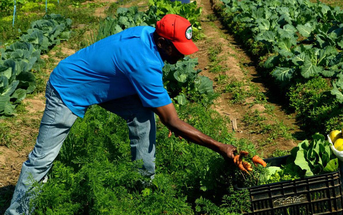 Bolsonaro veta quase integralmente lei de auxílio à agricultura familiar